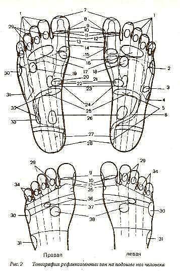 Рефлекторные зоны на подошве ног